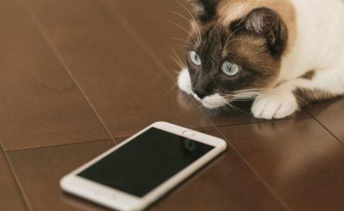 iPhone猫イメージ